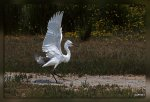 JMP_0473Aigrette_Gravelot1