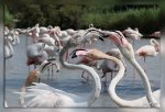 IMG_6093Flamants_roses1