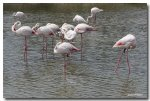 IMG_8651flamants_roses1